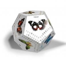 Schmetterlinge 2018